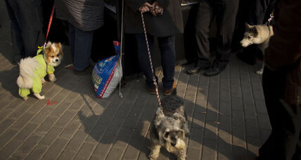 Why China has a 'one dog policy'