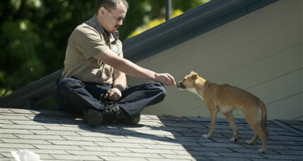 Dog persuaded off roof with hot dog bits from officer