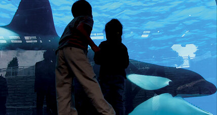'Blackfish' centers on the dangers of orcas in captivity