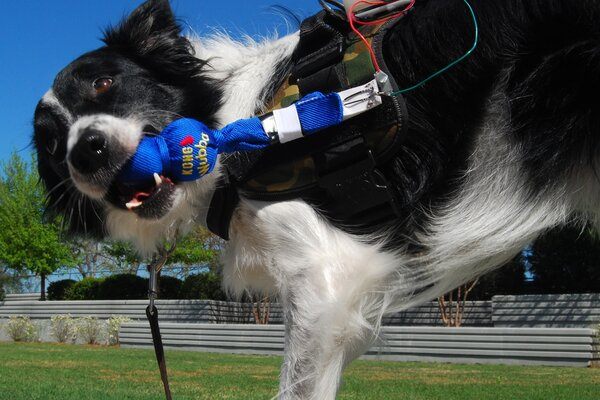 Fido How A Computer Vest Can Help Dogs 39 Talk 39