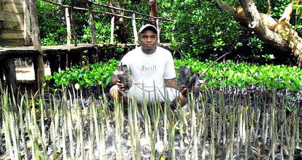Planting mangrove trees pays off for coastal communities in Kenya