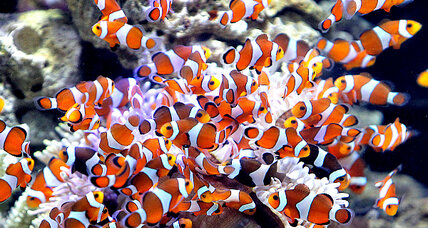 Cleaning up the global aquarium trade