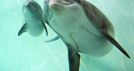 Dolphins actually pretty eloquent, say scientists