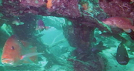 Underwater forest: Ancient cypress forest buried off Alabama's coast