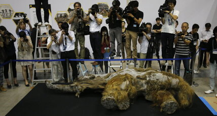 Woolly mammoth goes on view in Japan