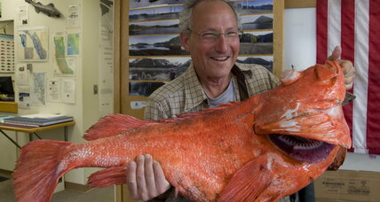200-year-old rockfish caught off Alaska coast