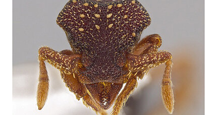 New ant species! Scientists uncover treasure trove...of ants!