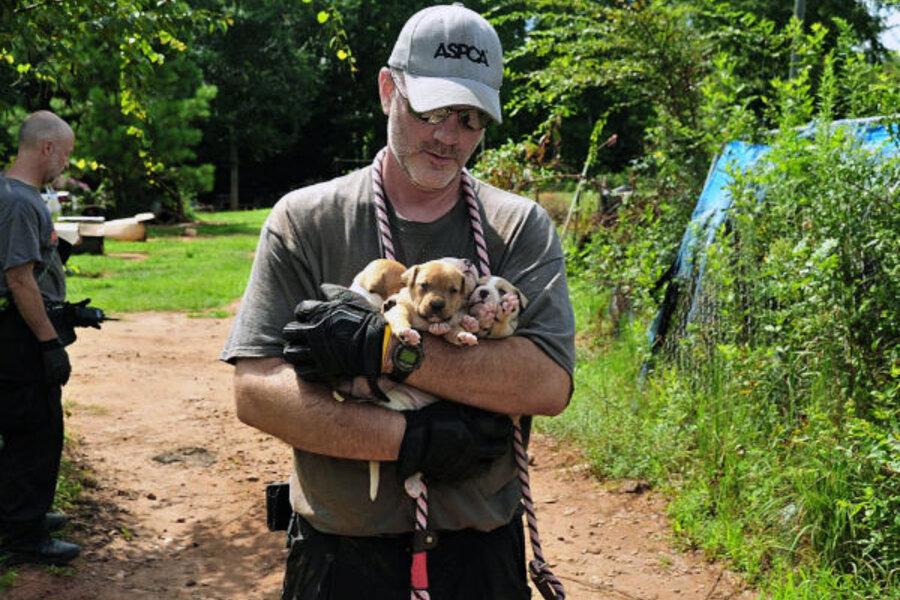 dog fighting ring bust 360 pit bulls rescued dozen