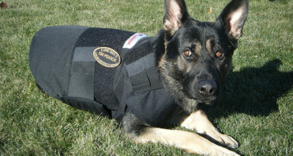 Cindy Elkind started Kevlar for K9s to protect 'working' dogs
