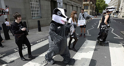 Badger cull in Britain sparks protest