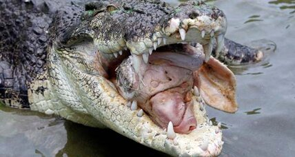 Crocodile attack leads to fatality in Australia