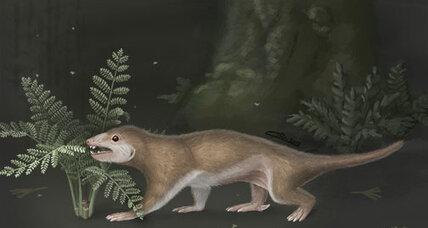 When did mammals evolve? Two new papers disagree.