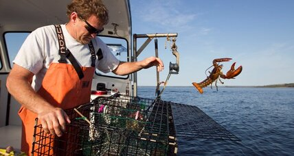 Lobster shell disease moves toward Maine