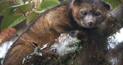 Newly discovered mammal solves decades-old zoological mystery