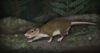 Ancient mammal beat the dinosaurs, was outdone by rodents
