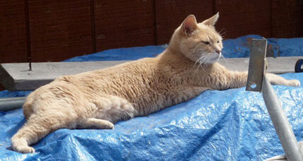 Mayor Stubbs: Alaska town rallies around wounded feline