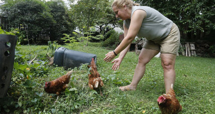 Adopt a chicken: Hens fly the coop via private jet. Moms, here's a pet idea