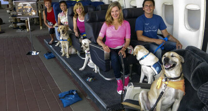 Dogs learn to fly at Hollywood flight school