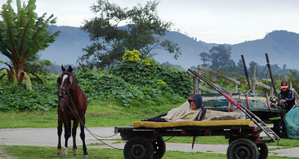 No horsing around: Bogotá wants horse-drawn carts off the streets