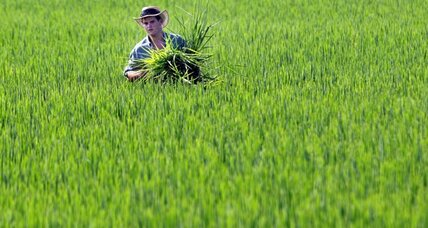 Arsenic in rice? Not a big worry, FDA says.