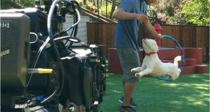 'Lucky dog:' CBS show gives 22 pups new leash on life