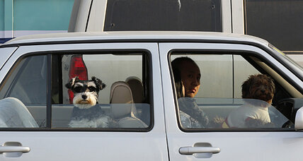 How to keep your pet safe in a car