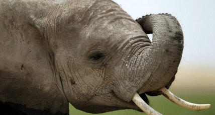 Why elephants work well with people: They get the point (+video)