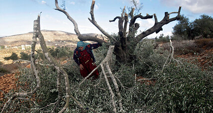 Why rabbis are helping Palestinians defend their olive harvest