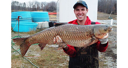 Are Asian carp reproducing in the Great Lakes?