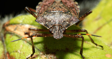 Stink bugs, termites could soon be part of your diet (+video)