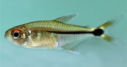 Some 60 new species found in remote Suriname