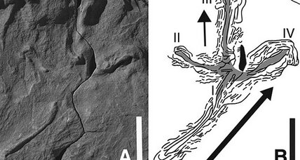 Dinosaur-era bird tracks: Proof of 100-million-year-old flight?