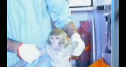 Amidst controversy, Iran says it will send another monkey to space