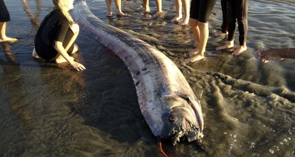 California oarfish: Second 'serpent' washes ashore, baffles scientists