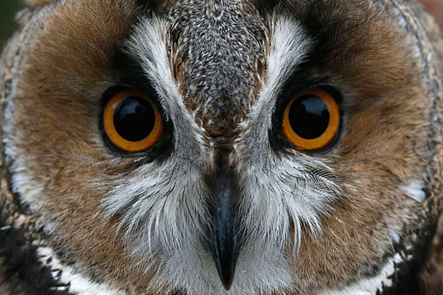 larks and owls essay