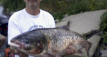 Senators raise alarm over Asian carp invasion in Great Lakes (+video)