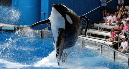 SeaWorld killer whale: Should trainers swim with orcas? Appeals court to rule.