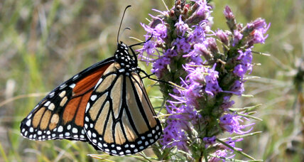 Environmentalists work to save a precious patch of Texas blackland prairie