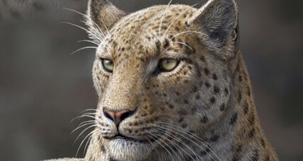 Oldest big cat fossil ever found is new species