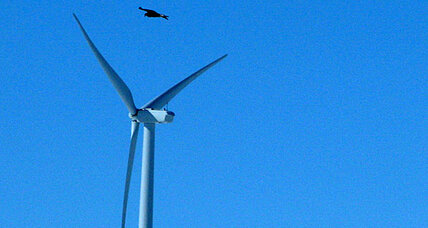 Eagle deaths: Unprecedented $1 million fine for Wyoming wind farms
