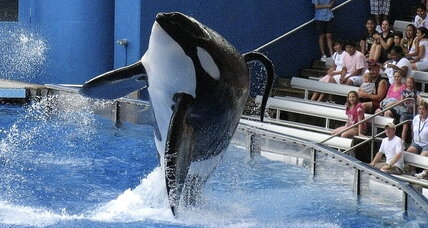 SeaWorld killer whale trainer dies: Is SeaWorld to blame? (+video)