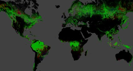 Missing trees: Interactive map shows global deforestation