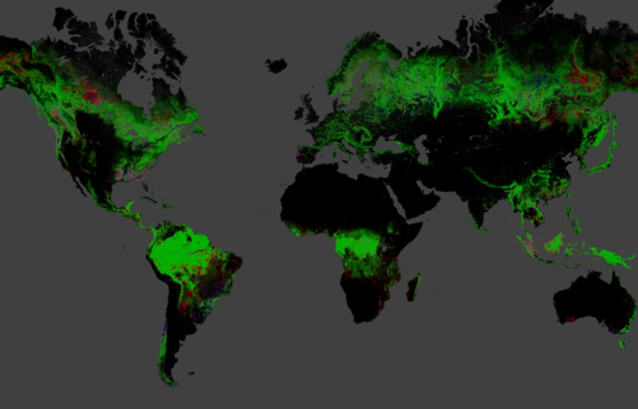 Missing Trees Interactive Map Shows Global Deforestation - Interactive global map