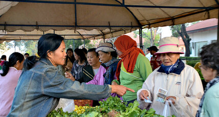 Organic farming buds in Laos