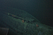 WWII submarine found: what it was doing in underwater 'trash heap' off Hawaii (+video)