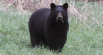 Florida bear attack injures woman walking dog