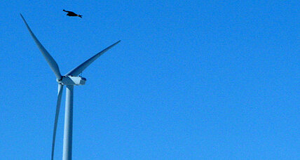 Eagle deaths: US to let wind energy kill eagles
