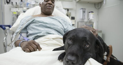 After subway fall, Cecil Williams will keep his guide dog, thanks to donors (+video)
