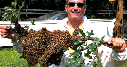 Andrew Coté roams the world to teach the sweet science of beekeeping
