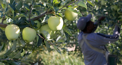 How to save 600 million pounds of ugly apples